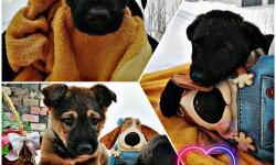 О чем говорят пигментные пятна у собак?