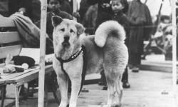 История Хатико: реальная история о преданности и любви четвероного питомца