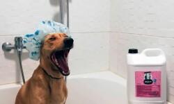 Короткошерстные собаки: особенности ухода за шерстью